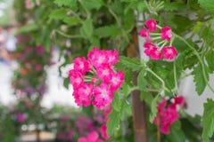 事件繁殖的植物在冬天 免版税库存照片