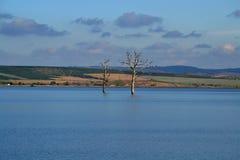二个停止的结构树 免版税库存照片