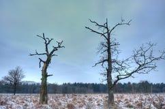 二个停止的结构树 免版税库存图片
