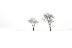 二个冬天结构树 免版税图库摄影