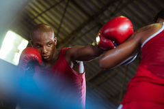 二个在拳击台的男性运动员战斗 免版税库存图片