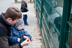 二个小男孩和父亲提供的动物在动物园里 免版税库存图片
