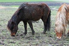 二个小马 免版税库存照片