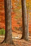 二个树干构成的秋天路径 免版税库存照片