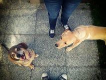 二个狗朋友 免版税库存照片
