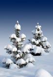 二个积雪的毛皮结构树 库存图片