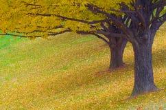 二个结构树在秋天 库存图片