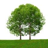 二个结构树 库存图片