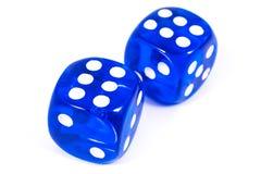 二个蓝色彀子 免版税库存照片