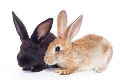 二兔子 免版税库存图片