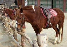 二匹被备鞍的马 库存照片