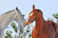 二匹马纵向在冬天 库存图片