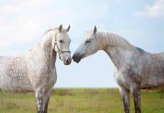 二匹马纵向在冬天 免版税库存照片