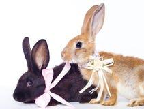 二只兔子弓 库存图片