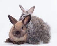 二只兔子 库存图片
