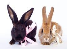 二只兔子 库存照片