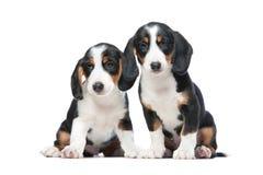 二只小狗 免版税库存图片