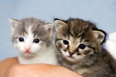 二只小猫 免版税库存照片