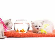 小猫和鱼 库存照片