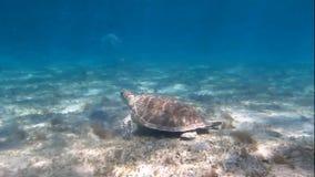 二只海龟 影视素材
