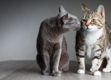 二只猫 免版税库存图片