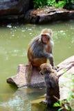 二只猴子 库存图片