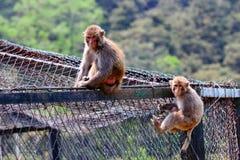 二只猴子 图库摄影