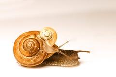 二只蜗牛 免版税图库摄影