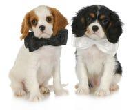 二只逗人喜爱的小狗 免版税库存照片