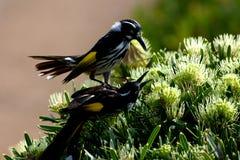 二只鸟使用 免版税库存照片