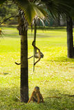 二只猴子使用 免版税库存图片