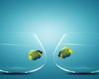 二在二个碗的神仙鱼 图库摄影