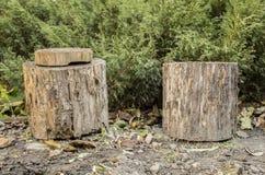 二木树桩 图库摄影