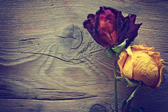 二朵干玫瑰 库存照片