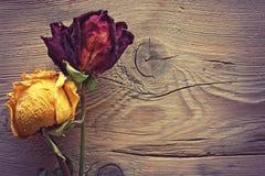 二朵干玫瑰 免版税库存图片