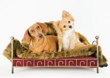 二条狗 免版税库存图片
