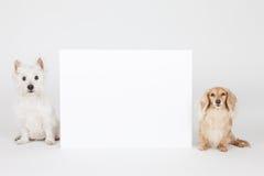 二条狗 免版税图库摄影