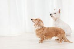 二条狗 库存照片