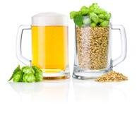 二杯子: 新鲜啤酒和有很多大麦蛇麻草 免版税库存图片