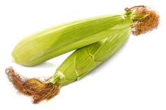 二查出的玉米棒 免版税图库摄影
