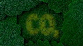 二氧化碳 吸收二氧化碳 背景深绿叶子 关闭4k 股票视频