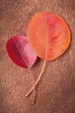 二片秋季叶子 免版税图库摄影