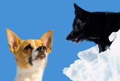 二甜和与蓝天的美丽的狗在背景中 库存照片