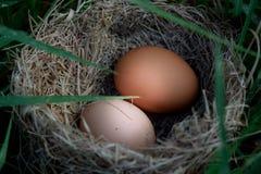 二鸡蛋 免版税库存照片