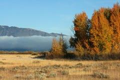 云堤和结构树 库存图片