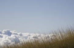 云彩从事园艺  库存照片