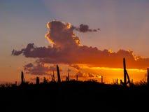 云彩和日落或者日出用剪影仙人掌 免版税库存图片