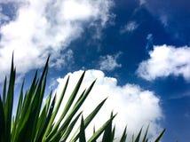 云彩和蓝天和树神奇的自然的美好的风景图片 免版税库存照片