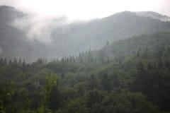 云彩和雾在峡谷树木丛生的山 库存照片
