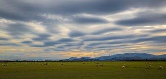 云彩形成入样式在一个农村风景的日落与吃草的绵羊 免版税图库摄影